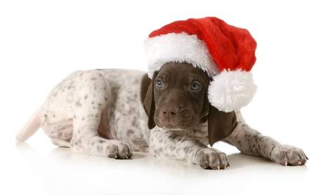 Keeping Your Fur Babies Safe During The Holiday Season