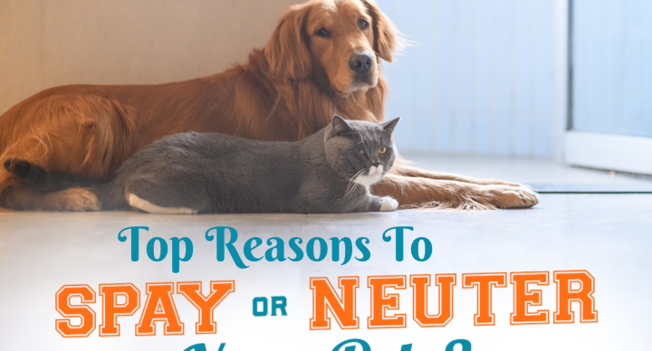 Top Reasons to Spay or Neuter your Adorable Pet